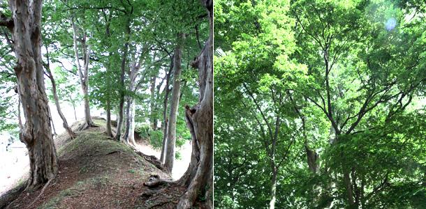 三の丸 大樹林